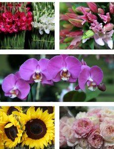 Regalar una flor flores